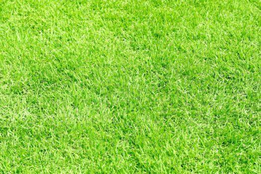 人工芝の寿命はどれぐらい?天然芝との違いや費用・特徴まとめ