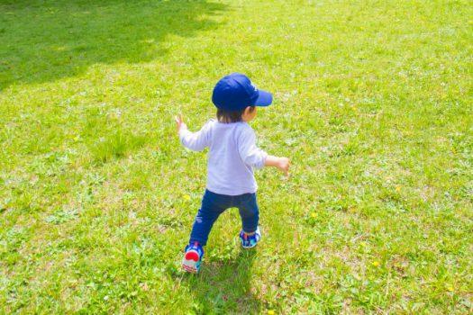 庭に芝生を張る2つの方法
