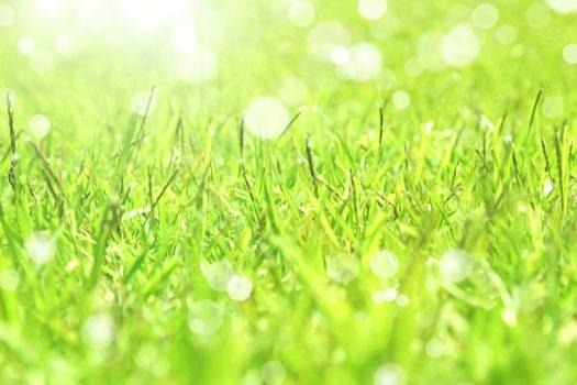芝生を上手に張るポイントと季節に合わせた管理方法