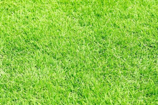 人工芝の下に防草シートを敷くのはアリ?