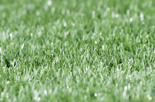 人工芝は虫がわくって本当?防草シートや長持ちさせるコツについて