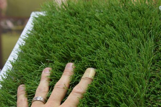 庭に芝生を張るなら|天然芝と人工芝の比較・手入れ年間スケジュール