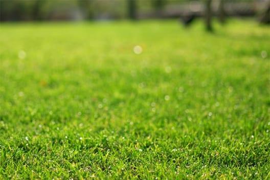 【芝生の植え方】簡単な作業手順と芝生を上手に育てる基礎知識を解説